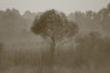 399 A Tree in a Misty Morning.JPG
